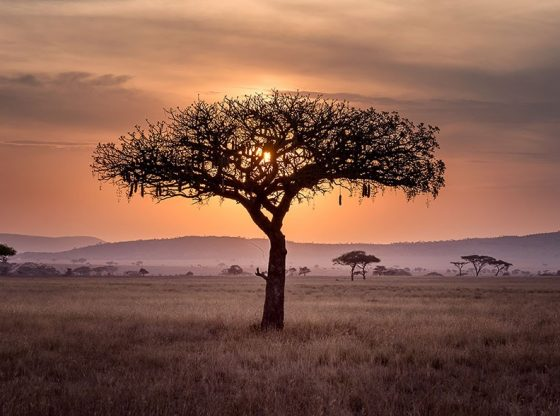 3 ways COVID-19 could actually spark a better future for Africa
