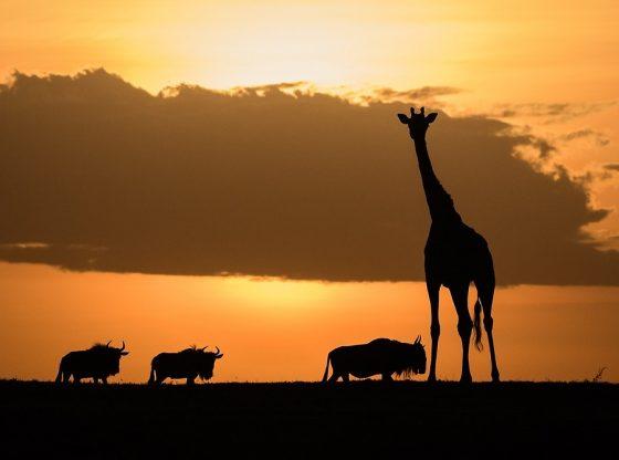 Covid-19 en Afrique : quelques visages sur la ligne de front