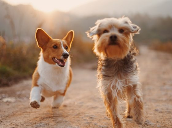 How safe are pets from COVID-19?