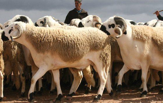 En Algérie, l'Aïd sous le signe du coronavirus