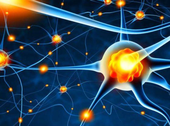 Le coronavirus peut aussi s'attaquer aux neurones, confirme une nouvelle étude